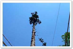 支障木伐採画像1