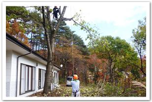 支障木伐採画像2