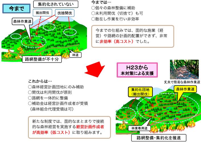 森林管理と補助金の仕組み